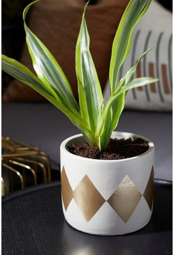 Dina Gold Dip Cement Planter