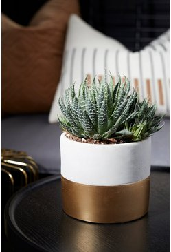 Grey Tuva Gold Dip Cement Planter