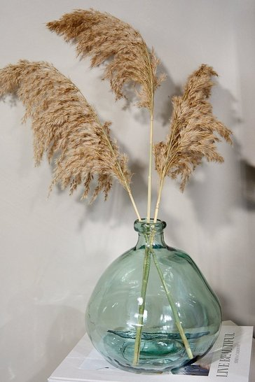 Natural beige The Dried Flower Collection Pampas 3 Stems