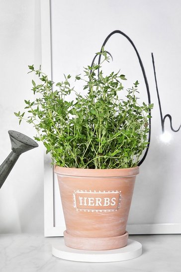 Brown Herbs Pot Planter