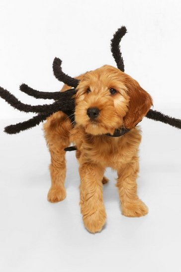 Black Halloween Pet Spider Costume